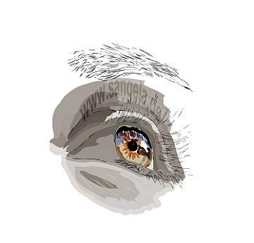Глаз auge